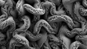 carbon nanotube furry spaghetti strands